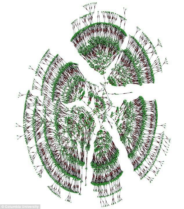 Trong khoảng 6.000 cây Gia phả của các cá nhân trải dài 7 thế hệ được diễn tả trong màu xanh và kết hôn, màu đỏ. Các nhà nghiên cứu đã tìm thấy một cây lớn 13 triệu người trải dài trung bình 11 thế hệ cũng như các cây gia phả nhỏ khác.