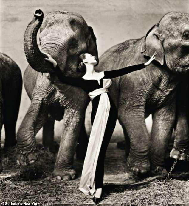 """Bức """"Dovima và những chú voi, đầm dự tiệc của Dior, gánh xiếc Cirque DHiver, Paris"""" được chụp bởi nhiếp ảnh gia người Mỹ Richard Avedon. Bức ảnh được kỳ vọng đạt mức giá từ 300.000 USD - 500.000 USD (tương đương từ 6,8 tỷ đồng - 11,3 tỷ đồng)."""