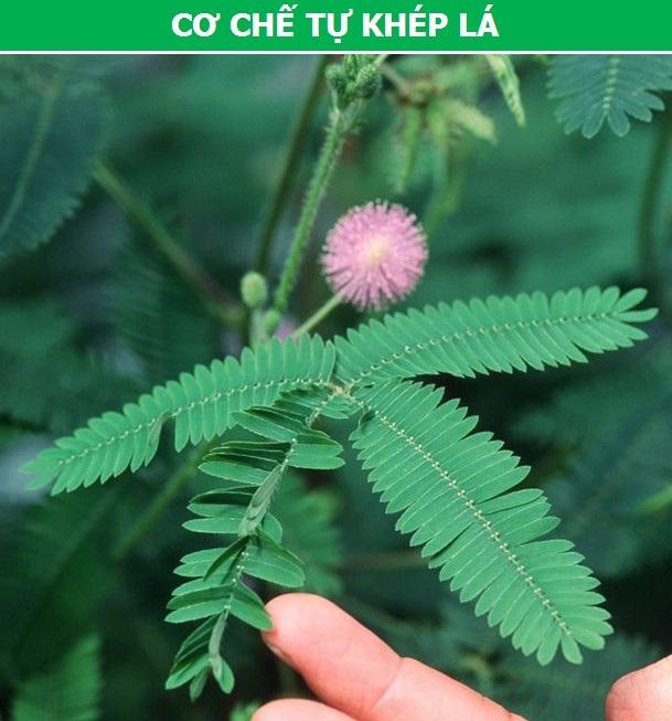 Khám phá những cơ chế tự vệ đặc biệt của thực vật - 5