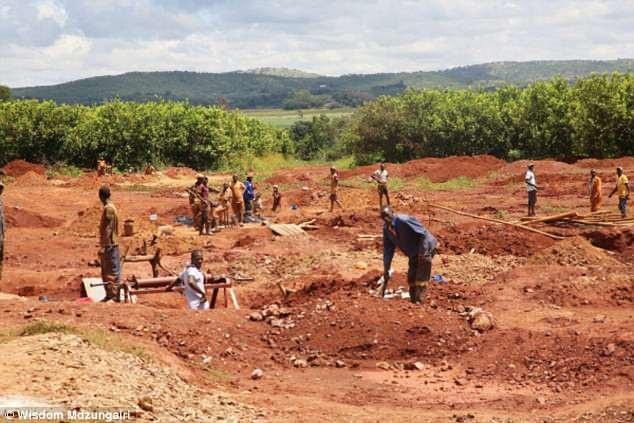 Những người đào vàng tại nông trang của bà Grace Mugabe (Ảnh: Dailymail)