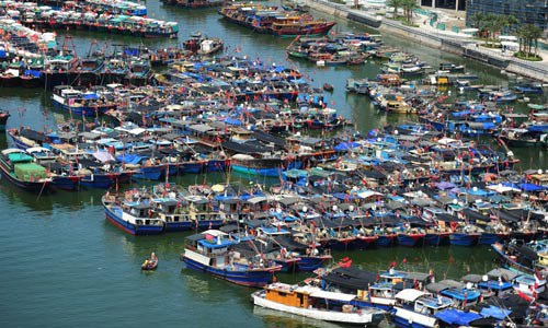 Hạm đội tàu cá Trung Quốc tại cảng Chu San, tỉnh Chiết Giang Ảnh: THE NEW YORK TIMES