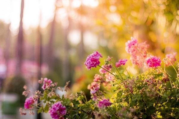 """Bộ ảnh đẹp chủ đề """"hoa"""" dùng để gửi lời chúc đến phái nữ trong ngày 8/3 - 14"""