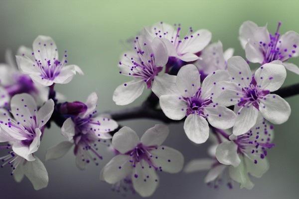 """Bộ ảnh đẹp chủ đề """"hoa"""" dùng để gửi lời chúc đến phái nữ trong ngày 8/3 - 16"""