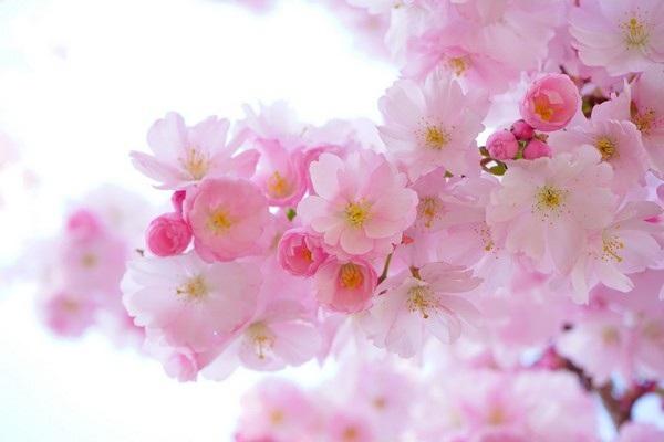 """Bộ ảnh đẹp chủ đề """"hoa"""" dùng để gửi lời chúc đến phái nữ trong ngày 8/3 - 17"""