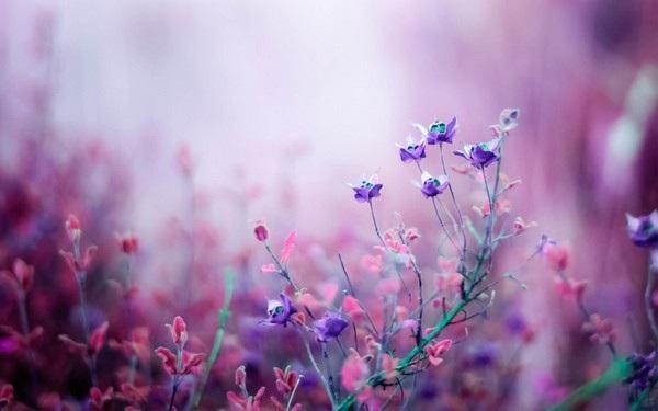 """Bộ ảnh đẹp chủ đề """"hoa"""" dùng để gửi lời chúc đến phái nữ trong ngày 8/3 - 2"""