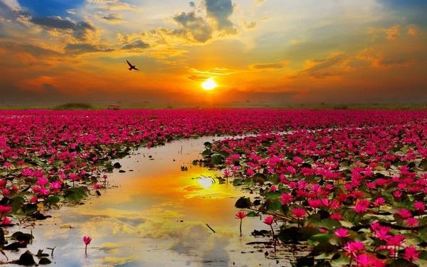 """Bộ ảnh đẹp chủ đề """"hoa"""" dùng để gửi lời chúc đến phái nữ trong ngày 8/3 - 3"""