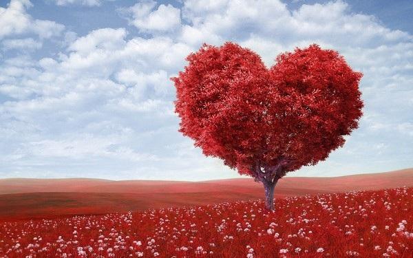 """Bộ ảnh đẹp chủ đề """"hoa"""" dùng để gửi lời chúc đến phái nữ trong ngày 8/3 - 6"""