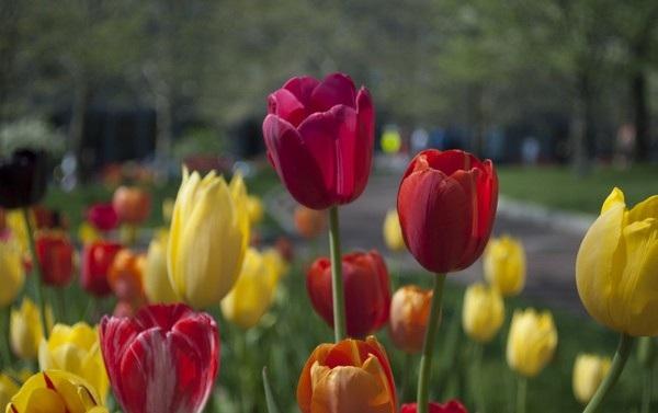 """Bộ ảnh đẹp chủ đề """"hoa"""" dùng để gửi lời chúc đến phái nữ trong ngày 8/3 - 8"""