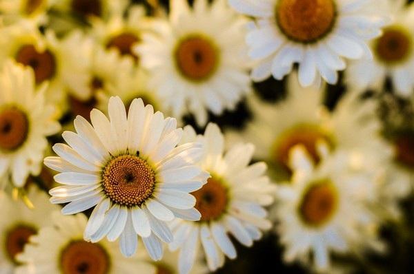 """Bộ ảnh đẹp chủ đề """"hoa"""" dùng để gửi lời chúc đến phái nữ trong ngày 8/3 - 9"""