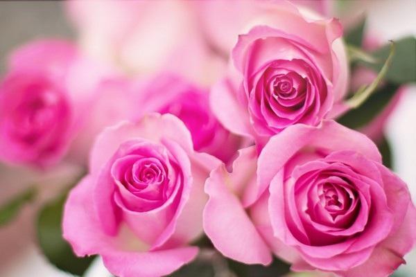 """Bộ ảnh đẹp chủ đề """"hoa"""" dùng để gửi lời chúc đến phái nữ trong ngày 8/3 - 10"""