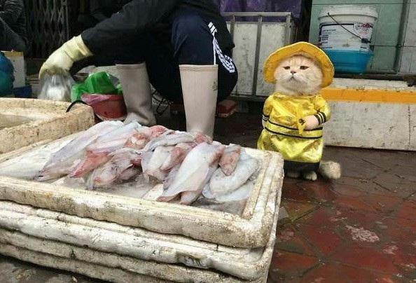 Chú mèo đang gây sốt tại chợ