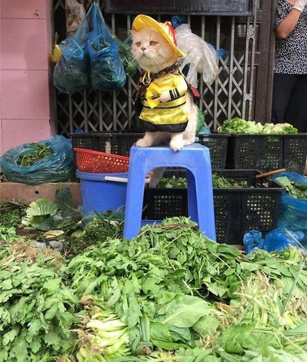 Không chỉ bán cá, chú còn bán cả rau