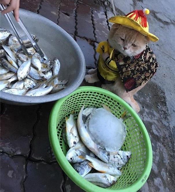 Chú mèo dạo qua hàng cá