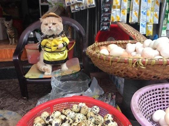 Mèo bán trứng