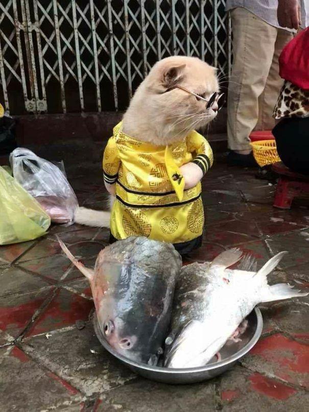 Đầu cá ngon thế này mà không ai mua nhỉ, chú mèo thắc mắc