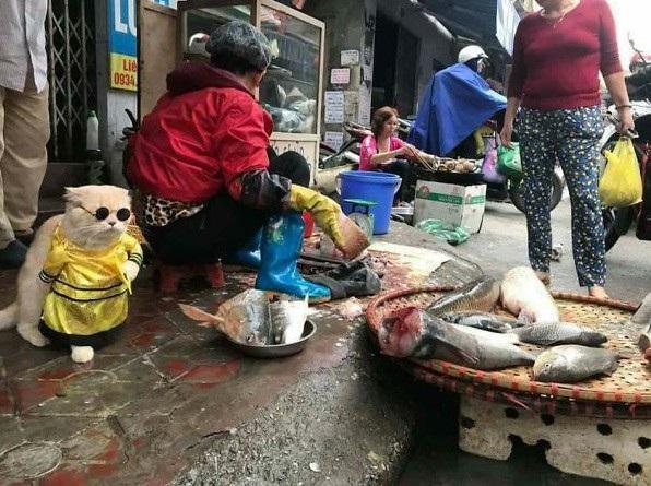 Người đi chợ thích thú khi mèo đeo kính đen