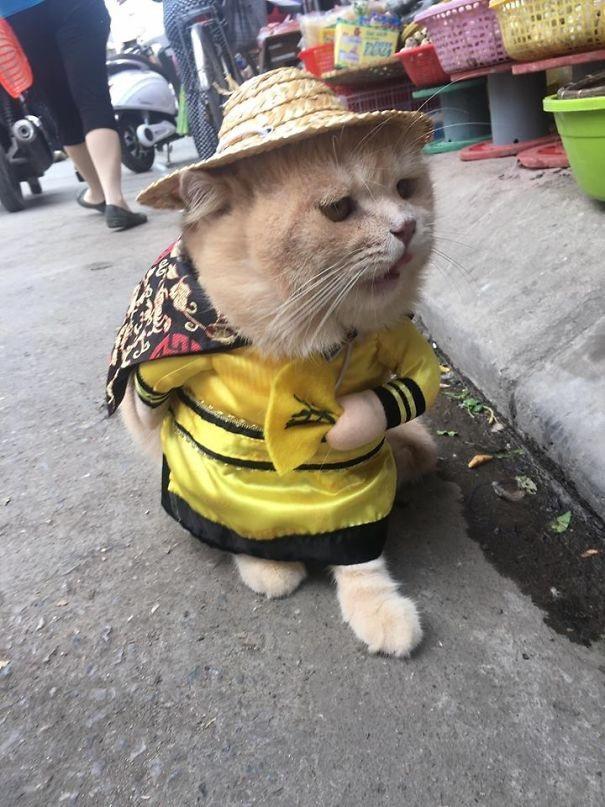 """Chú mèo bán cá, thịt gây """"sốt"""" ở chợ Hải Phòng - 9"""