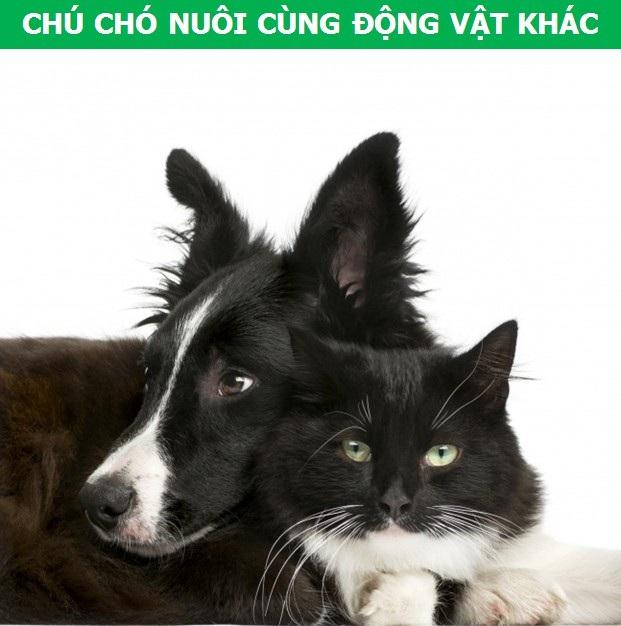 Mách bạn cách chọn giống chó phù hợp với mục đích và điều kiện của gia đình