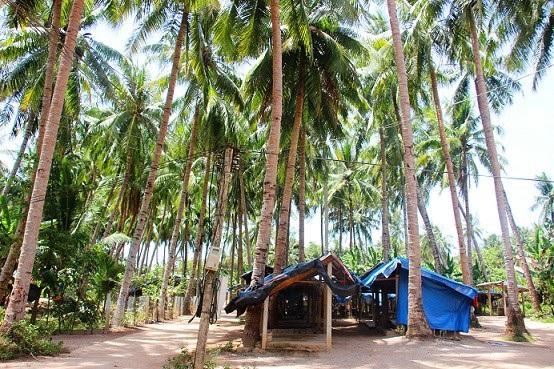 Những thân dừa có độ cao lên đến 20m chính là thử thách dành cho người thợ theo nghề