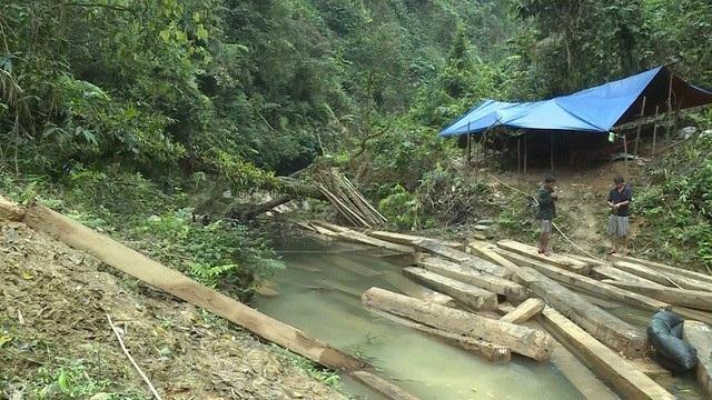 Hiện trường vụ phá rừng phòng hộ nghiêm trọng ở huyện Tuyên Hoá, tỉnh Quảng Bình
