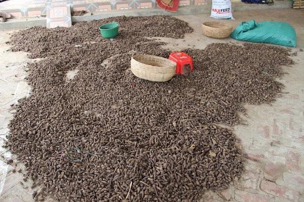 Anh Ngô Hồng Minh chất thải của giun còn dùng để trồng cây dược liệu, đem lại hiệu quả kinh tế cao. Ảnh Vũ Bảo