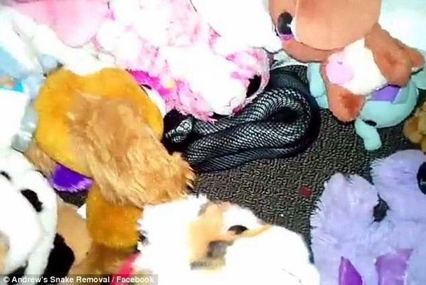 Con rắn cực độc đang nằm lẩn trốn bên trong đống đồ chơi của trẻ em