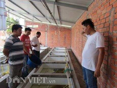 Trại lươn Thanh Tân luôn có khách hàng đến từ khu vực đồng bằng sông Cửu Long (ĐBSCL) và các tỉnh Đông Nam bộ tìm về mua lươn giống.