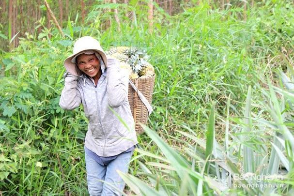 Nghỉ 30.4, lên đồi xem nông dân xứ Nghệ thu cả mùa dứa chín vàng - 6