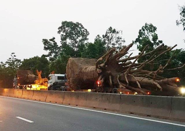 """Có hay không CSGT bảo kê xe chở cây """"quái thú"""" vượt 16 tỉnh thành? - 3"""