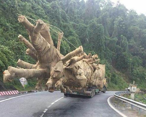 Xe chở cây quá khổ, quá tải đi trên quốc lộ 1