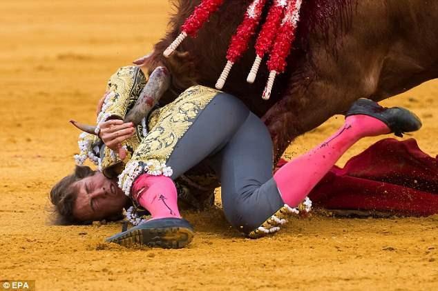 Người đấu bò Roman Collado đã bị mũi sừng bò đâm xuyên vào bọng chân tạo nên vết thương sâu chạy dài tới… 15cm.