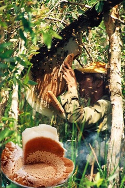 Rừng U Minh Hạ: Nơi con lươn cũng thành tinh - 2