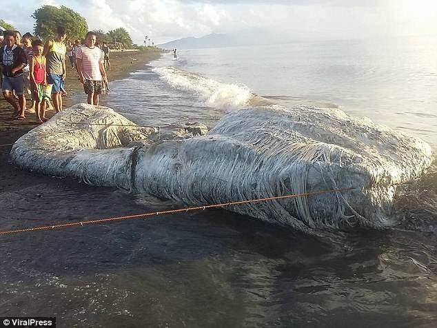 Xác sinh vật biển khổng lồ dài khoảng 6m.