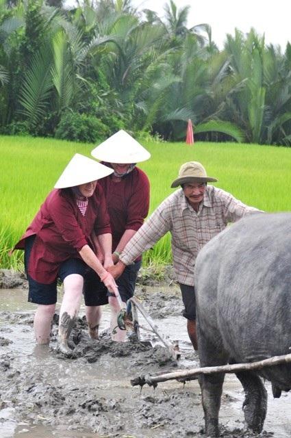 Du khách nước ngoài thích thú với tour trải nghiệm làm nông dân đi cày bừa trên ruộng