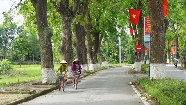 Con đường xanh mướt bóng cây dẫn về Làng Sen (Kim Liên, Nam Đàn, Nghệ An)