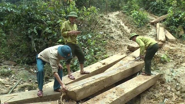 Một vụ phá rừng quy mô lớn xảy ra tại huyện Tuyên Hoá, tỉnh Quảng Bình