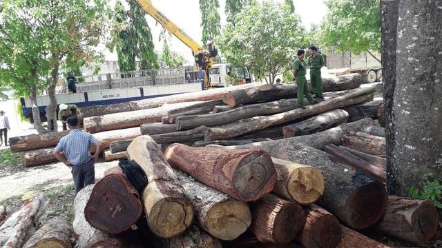 Số gỗ bị bắt quả tang được đưa về Hạt kiểm lâm huyện Cư Jút để kiểm đếm. (Ảnh: Thúy Diễm).