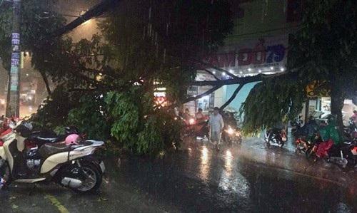 Một cây xanh trên đường Thống Nhất, phường 10, quận Gò Vấp bị tét nhánh ngã xuống đường