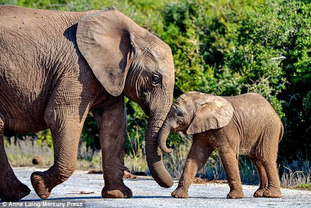 Những bức ảnh ngộ nghĩnh về hai chú voi con - 3