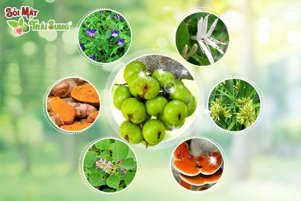 Hỗ trợ điều trị bằng thảo dược thiên nhiên