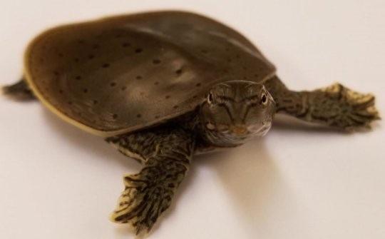 Tiết lộ cấu trúc bộ gien của khủng long từ so sánh giữa chim-rùa - 1