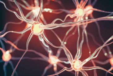 Đã tìm ra chìa khóa để ngăn ngừa bệnh Parkinson? - 1