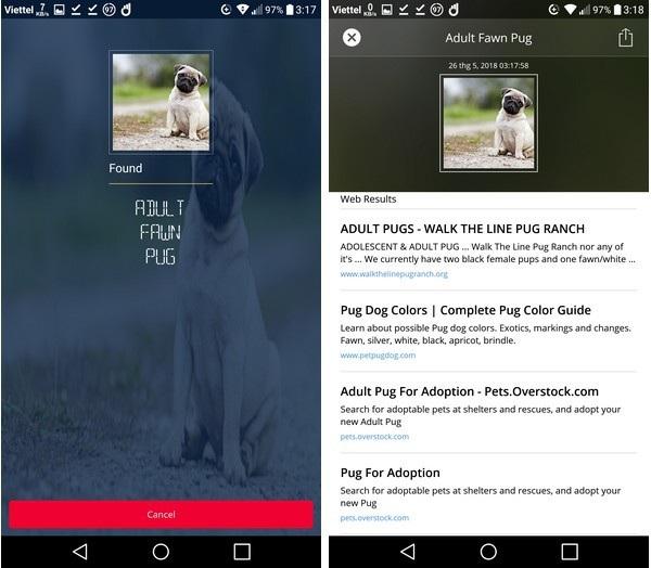 CamFind nhận diện được chú chó trong ảnh là giống chó Pug và đưa ra kết quả tìm kiếm liên quan