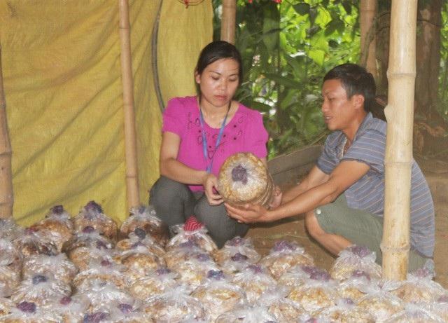 Đội viên Dự án 600 Phó Chủ tịch xã hướng dẫn người dân Châu Thôn (Quế Phong, Nghệ An) kỹ thuật trồng nấm