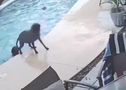 Chú chó Remus (phía dưới bể bơi) đã dùng đầu để đẩy bạn của mình lên bờ thành công