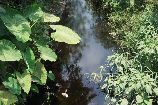 Nhớt thải trái phép khiến đoạn kênh bốc mùi hôi thối. Nguy hại hơn, nhớt thải này nếu không được phát hiện kịp thời sẽ đổ ra sông Phú Lộc và ra biển, gây ô nhiễm môi trường nghiêm trọng