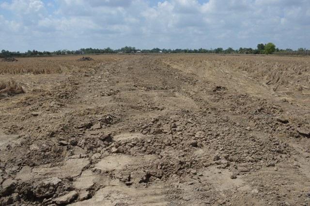 Mặt ruộng nham nhỡ sau khi bị khai thác đất.