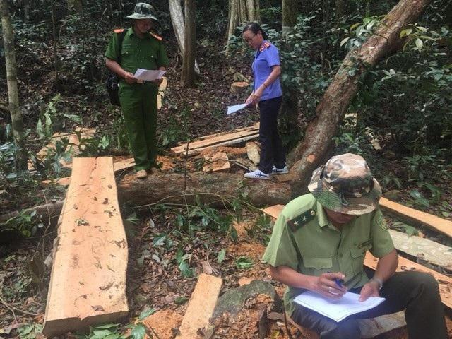 Lực lượng chức năng tiến hành khám nghiệm hiện trường một vụ phá rừng ở Đắk Nông trong tháng 4/2018. (Ảnh: Dương Phong).