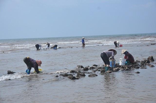 Nhặt đặc sản vẹm xanh trên biển, ngư dân thu tiền triệu mỗi giờ - 8