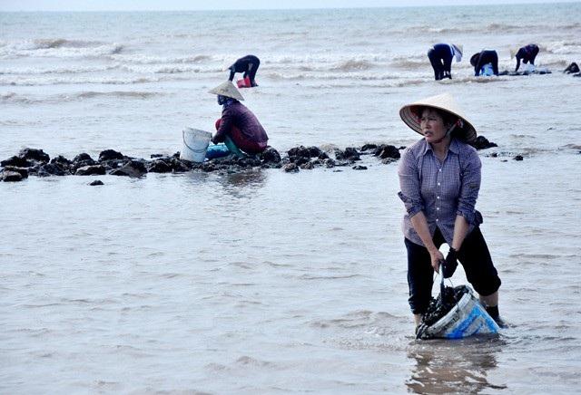 Nhặt đặc sản vẹm xanh trên biển, ngư dân thu tiền triệu mỗi giờ - 9